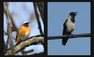 Vítání ptačího zpěvu, Slavkov u Brna
