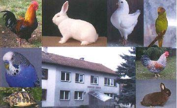 Okresní soutěžní výstava drobného zvířectva, Křenovice