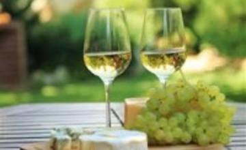 Výstava vín, Ždánice
